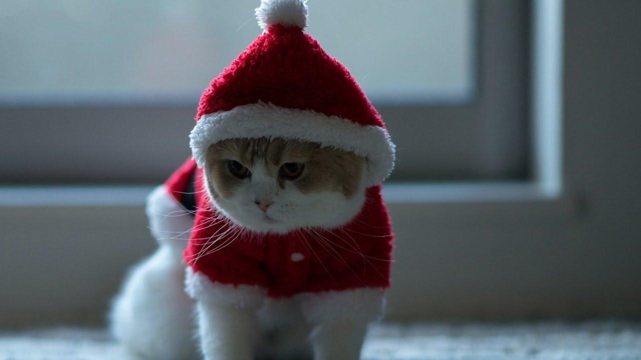 Костюмы для котов дед мороз