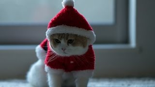 Топ 10 забавных костюмов для кошек