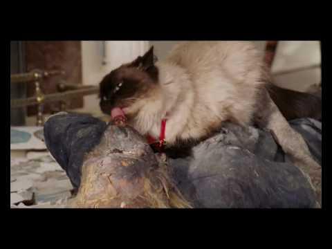cat fucking woman