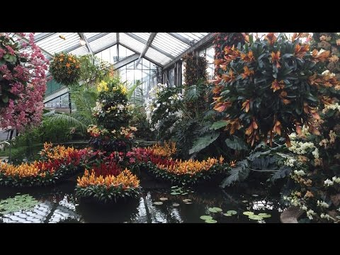 Royal Botanic Gardens Kew Alluring Orchids Festival 2015 Peaceful and Relaxing Music