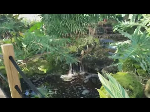 Vigoro Nursery Garden Cayman Islands