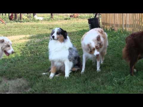 Barking contest...