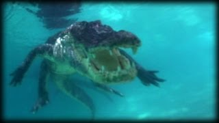 Swimming with Alligators 03   Music