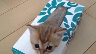 Коты – это жидкость