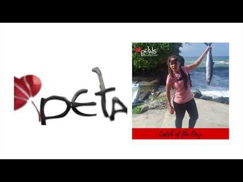 Petals pics of 2K17 DIGITAL MEDIA WORKSHOP TOCO, TRINIDAD!