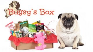Bugsy's Box November Review - The Subscription Box for Dogs thumbnail