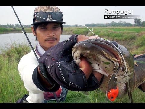 ตกปลาช่อนยักบ่อข้างนาด้วยเหยื่อของLF #pong posamton