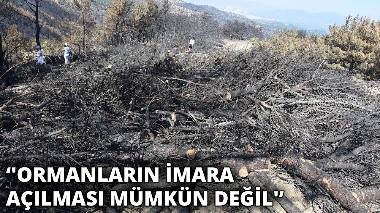İzmir'de yanan ormanlar için bağış kampanyası başlatıldı
