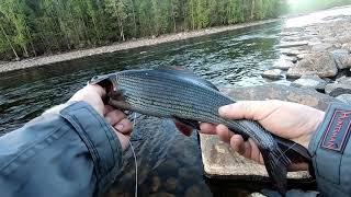 #Карелия#Рыбалка#Спининг#Хариус#2020 Открытие летнего сезона.
