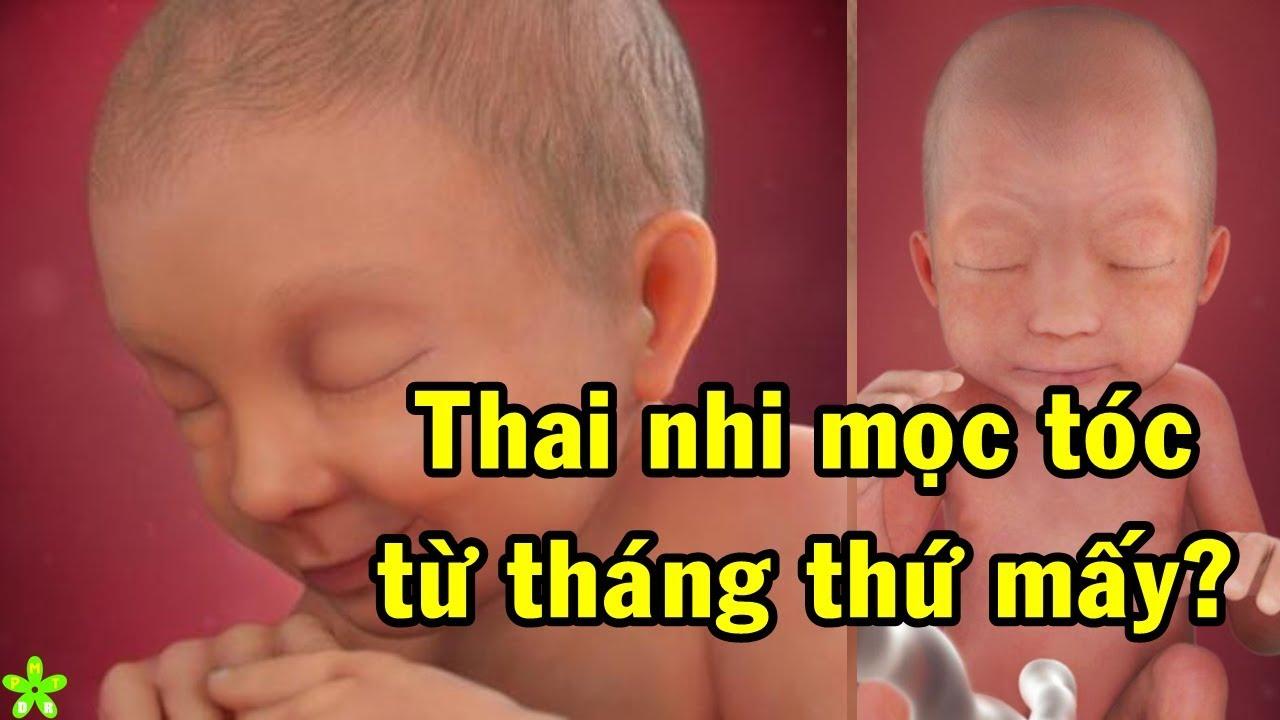 Thai nhi bắt đầu mọc tóc từ tháng thứ mấy? Mẹ bầu ăn gì để thai nhi mọc tóc nhiều?