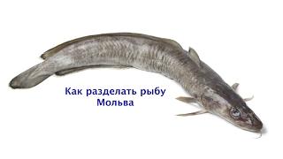 Как разделать рыбу Мольва. Мастер-класс по разделке рыбы.