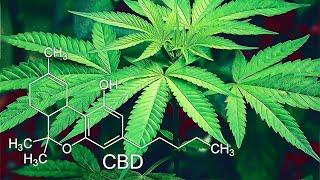 What is CBD Flower