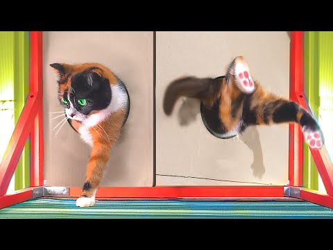 В НАСКОЛЬКО МАЛЕНЬКОЕ ОТВЕРСТИЕ СМОЖЕТ ПРОЛЕЗТЬ КУКИ? :D - Видео онлайн