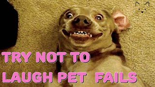 TRY NOT TO LAUGH 🐶 WATCH THESE FUNNY ANIMAL FAILS 🐶 BEST CLIPS