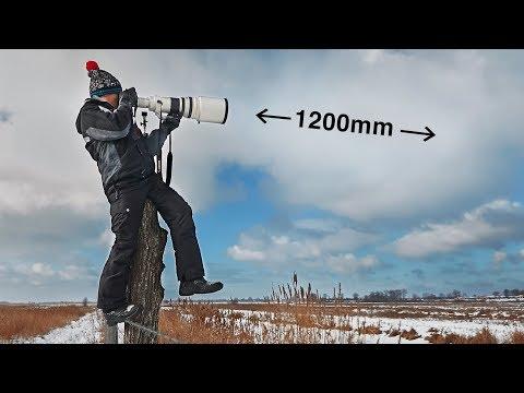 Что там на ДЛИННОМ конце? ФОТО охота из Canon 600mm в Чернобыльской зоне