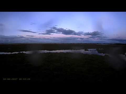 Estonia Crane cam 2017 10 08 big group of Cranes 18:42