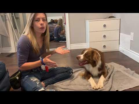 Dog tricks with Bruno