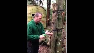 Filling the woodpecker feeder