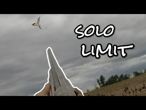 Georgia Dove Hunting Sunflower Field SOLO LIMIT