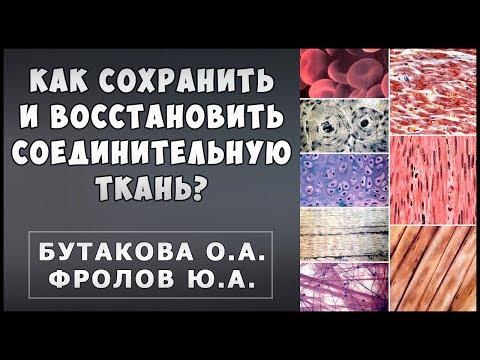 Соединительная ткань - Связки, хрящи, суставы, кожа. Бутакова О.А. и Фролов Ю.А.