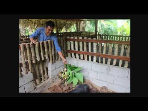 Raising Livestock Without Buying Feed