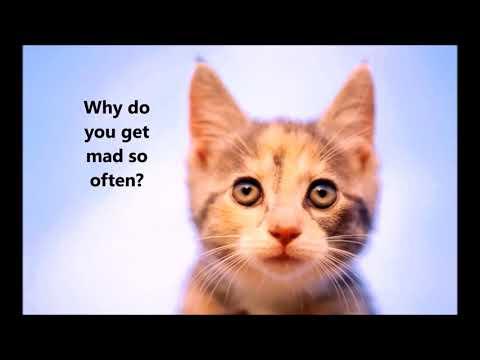 Ejercicios cardiovasculares para bajar de peso videos for cats