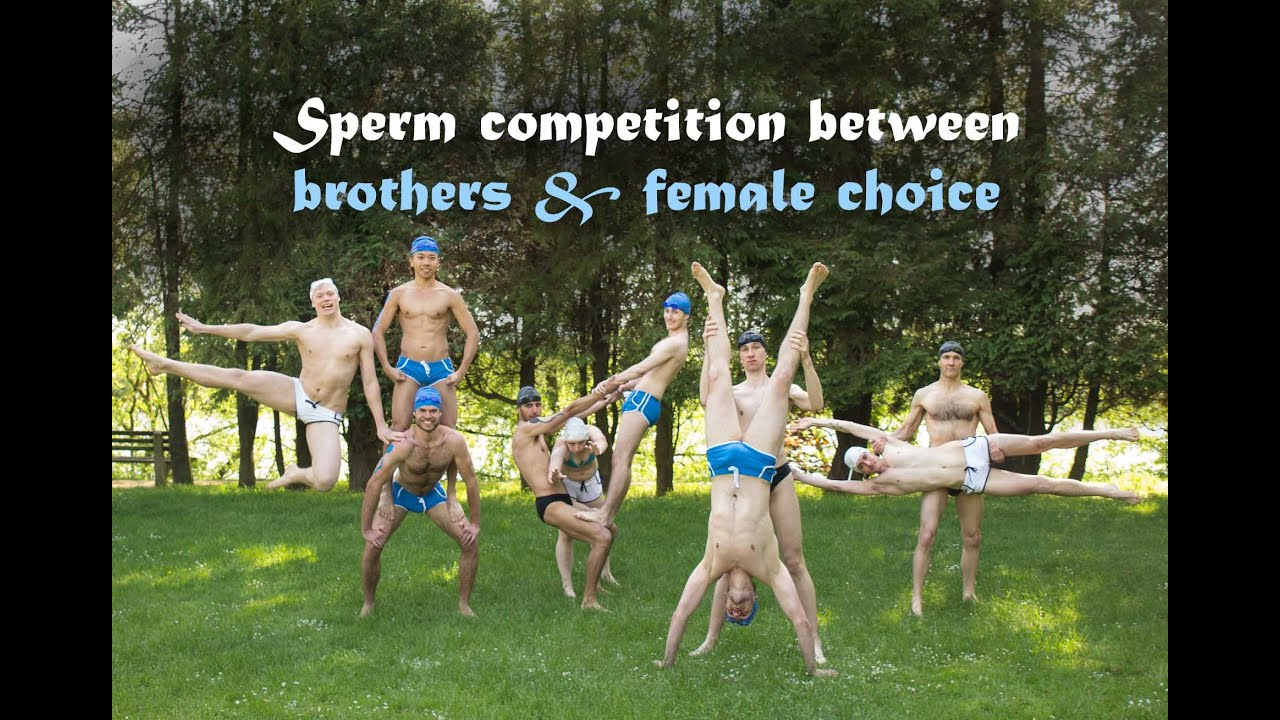 Sperm competition story