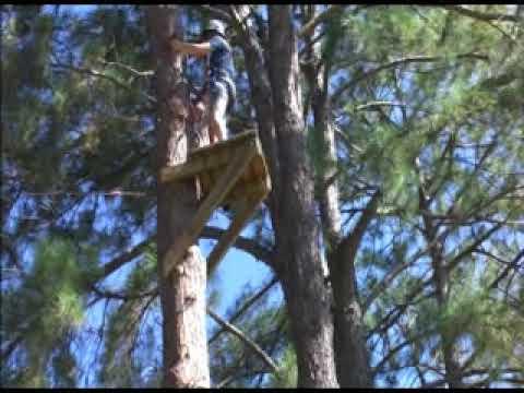 Flying Fox At Mapleton 09 Youtube