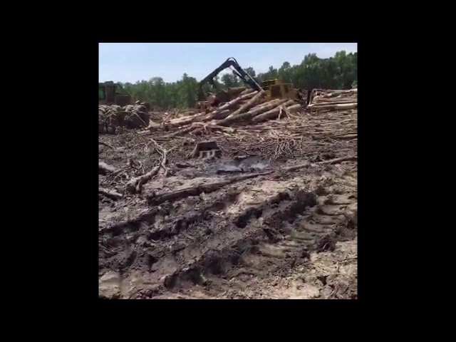 Pulling big wood with the Tigercat 630d