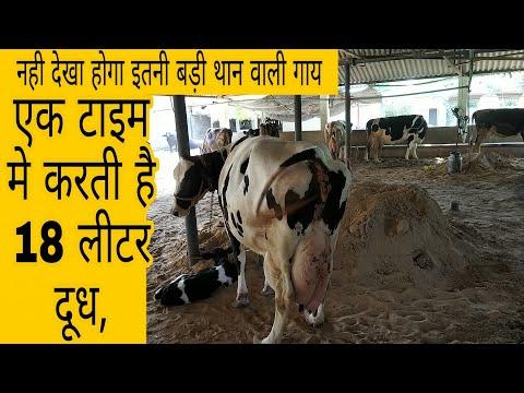 Paypaliya Dairy Farm Banaskantha Gujrat india