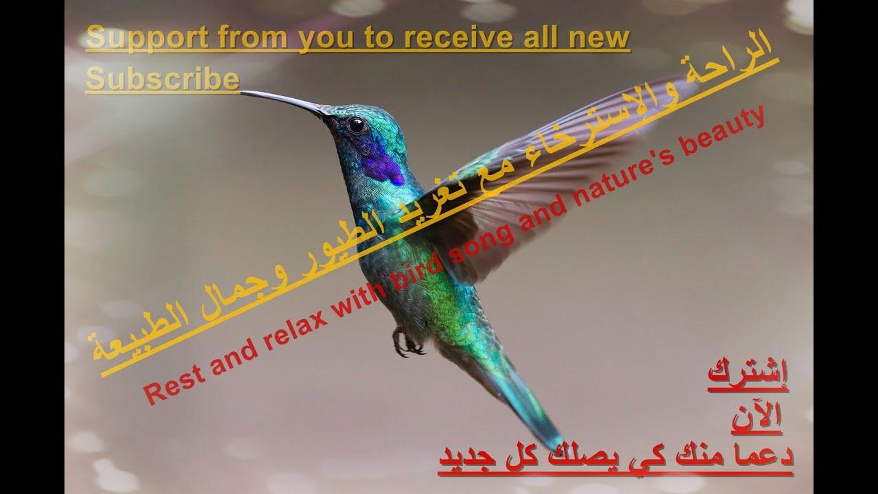 الراحة والإسترخاء مع تغريد الطيور وجمال الطبيعةRest and relax with bird song and nature's beauty