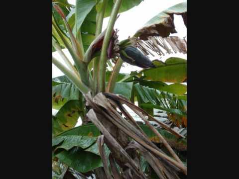 Guadeloupe 2010 - Part 1.wmv