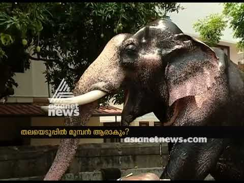 Elephants getting ready for Thrissur Pooram 2018