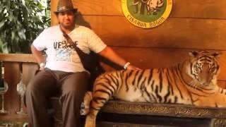 فيديو  شاب خليجي جلس لالتقاط صور مع النمر فماذا فعل؟