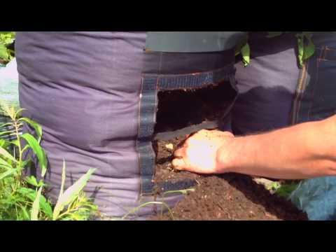 Картофель в мешках: проверка урожайности