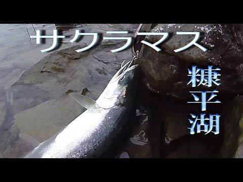 11月の北海道十勝の釣り 糠平湖 白銀の雪景色に白銀のサクラマスを追う  Trout Lure Fishing Hokkaido Japan