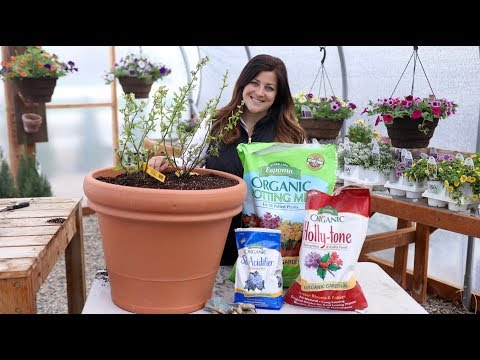 Mixing Up Acidic Soil To Plant Blueberries! 💙🌿// Garden Answer
