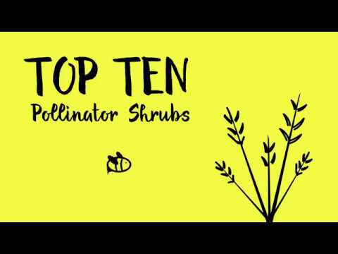 Top 10 Flowering Shrubs For Pollinators Youtube