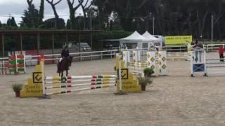 5 yo Top Quality horse. All scope