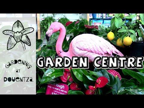 Houseplants at My Local Garden Centre