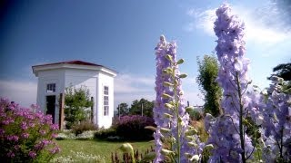 Lavender Delphinium | At Home With P. Allen Smith