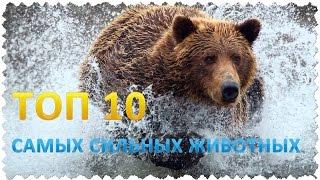 Топ 10 Самых сильных животных