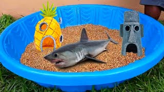 DIY KIDDIE Pool FISH POND!