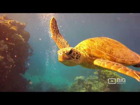 PORT DOUGLAS Travel & Destination Show Trailer