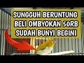 Pleci Ngeriwik Pleci Ombyokan Beli rb Part   Mp3 - Mp4 Download