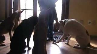 Reactive Dog Training, .wmv
