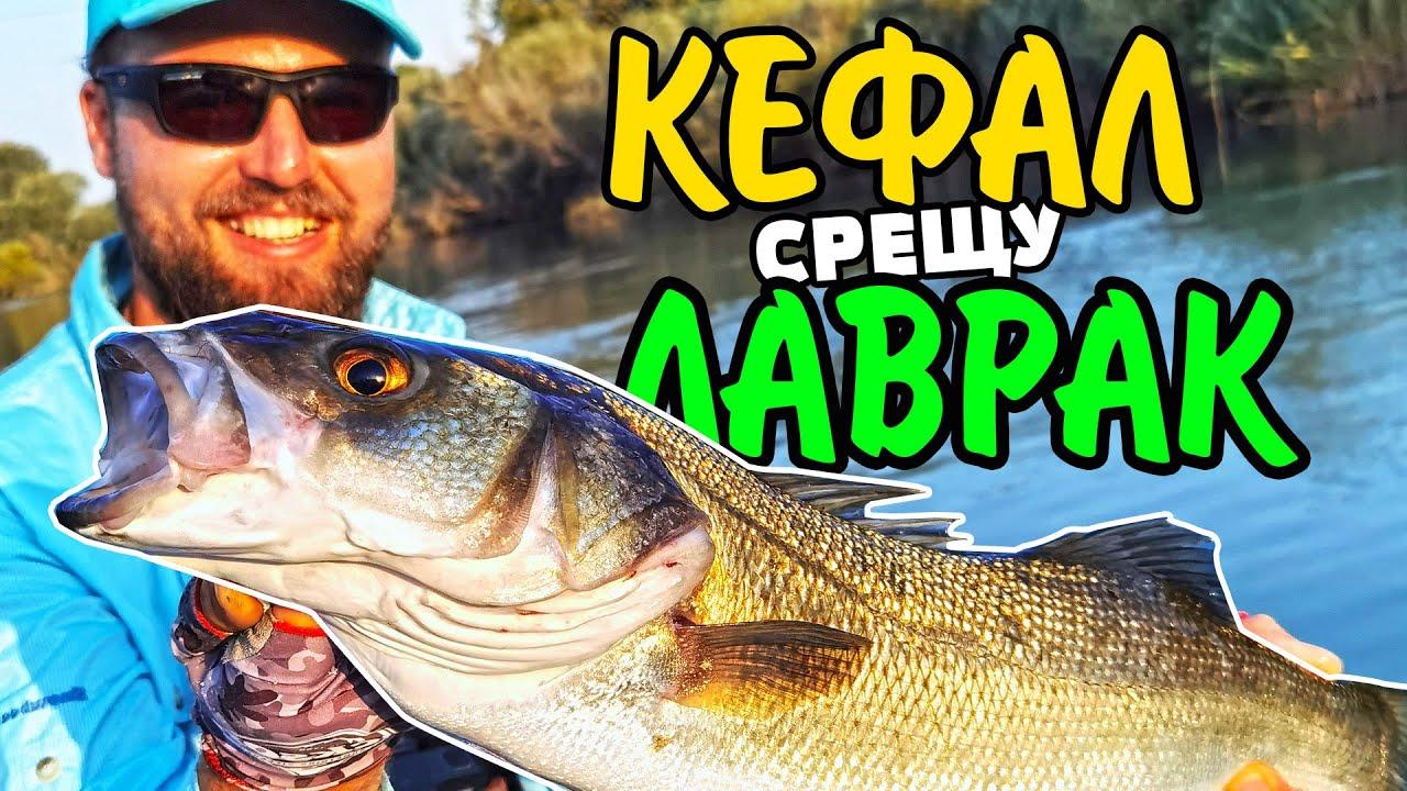 ТЪРСИМ МОРСКИ ВЪЛЦИ! Риболов на ЛАВРАК и КЕФАЛ (клен) SEA BASS fishing with KOSTAS