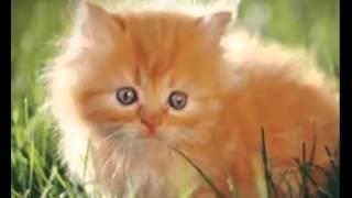Котята!!! МАЛЕНЬКИЕ, РЫЖИЕ МИЛЫЕ КОТЯТА!!! Взаимная подписка!!!///SMALL, RED CUTE KITTENS