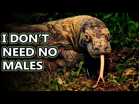 Komodo Dragon Facts: The Largest Living Lizards In The World | Animal Fact Files