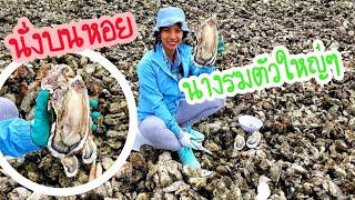 เก็บหอยนางรมตัวใหญ่ๆ /ชีวิตในอเมริกา/ c.k.taylor